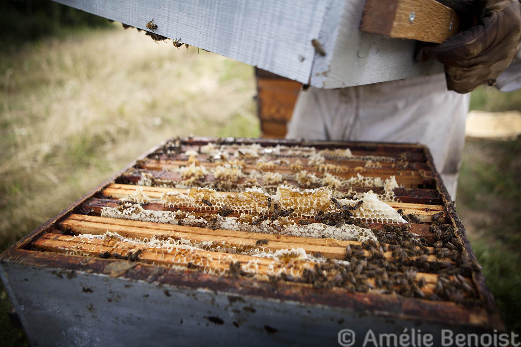 apiculteur rentable